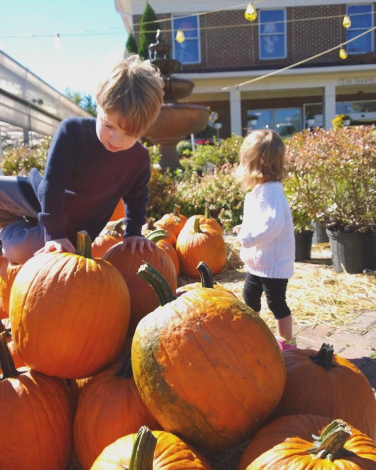 #wildpony_november #novemberbucketlist #photochallenge - cupcakesandwildponies