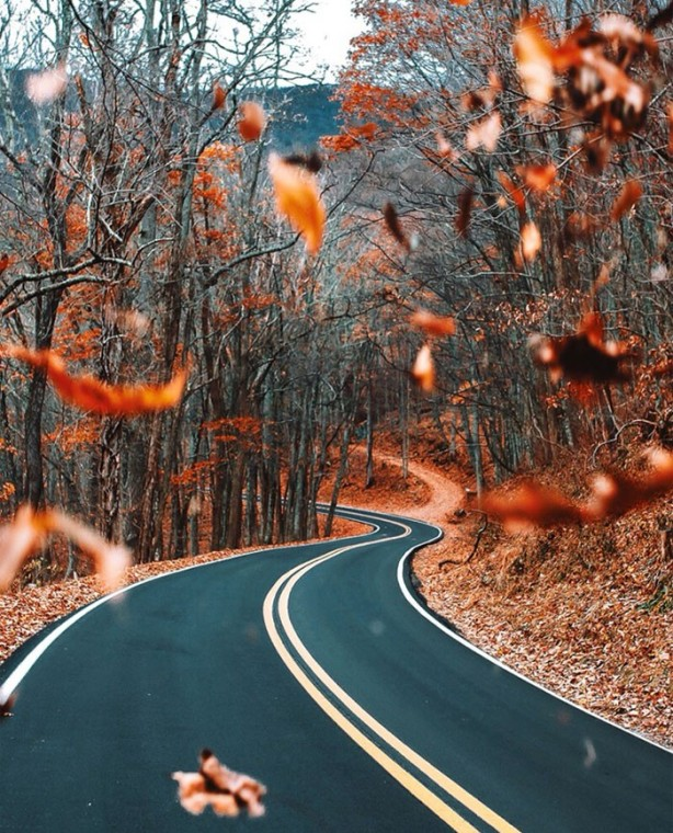 Falling leaves and winding road #fallcolors #rust #leaves