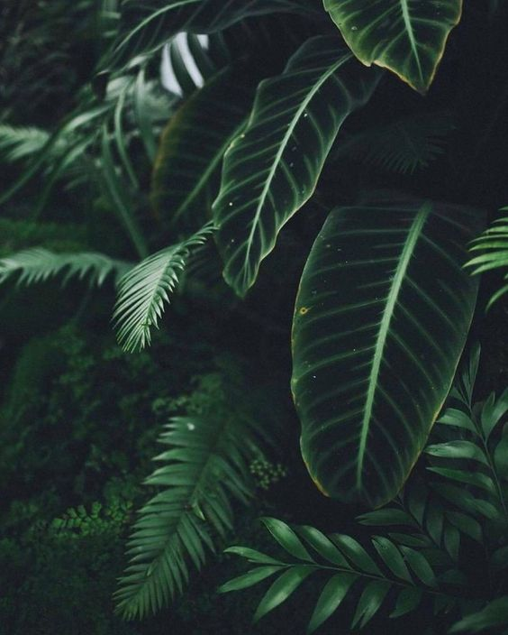 Color of the Month: Evergreen #Evergreen #wanderlust #colorinspiration #design #colorpsychology