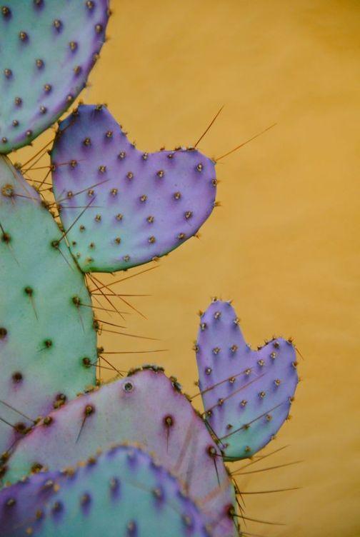 April color of the month: Lavender #purple #color #colorinspiration #designinspiration #cactus