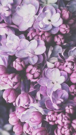 April color of the month: Lavender #purple #color #colorinspiration #designinspiration #flowers
