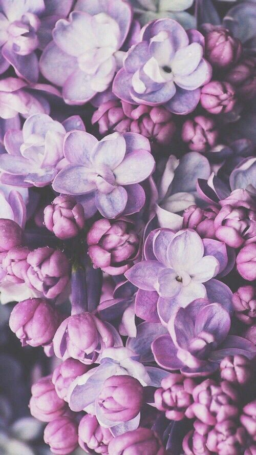 April color of the month: Lavender #purple #color #colorinspiration #designinspiration #flowers