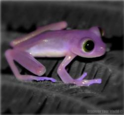 April color of the month: Lavender #purple #color #colorinspiration #designinspiration #frog #nature