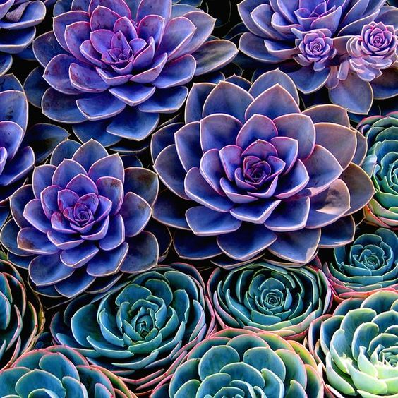 April color of the month: Lively Lavender #colorinspiration #designinspiration #lavender #purple #succulents #cactus #cacti #plants