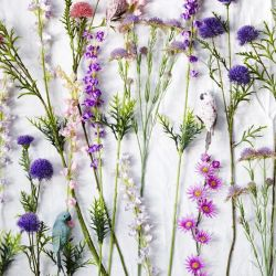 April color of the month: Lavender #purple #color #colorinspiration #designinspiration #wildflowers