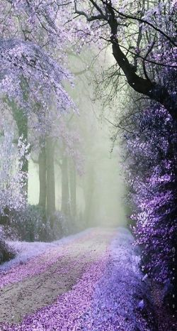 April color of the month: Lavender #purple #color #colorinspiration #designinspiration #naturephotography