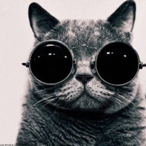 Cat wearing sunglasses
