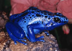 Electric Blue Frog #electricblue #colorofthemonth #blue #colorinspiration #designinspiration #lovestruckdesignhouse