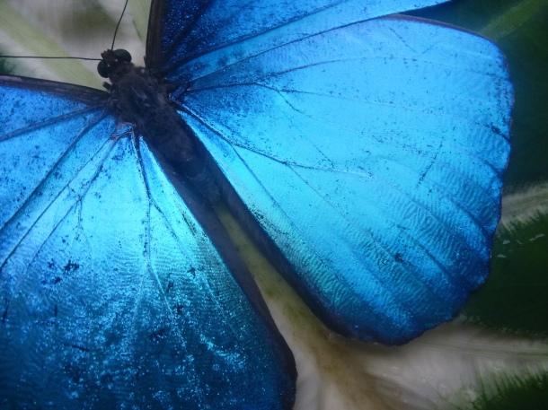 Blue Butterfly #electricblue #colorofthemonth #blue #colorinspiration #designinspiration #lovestruckdesignhouse